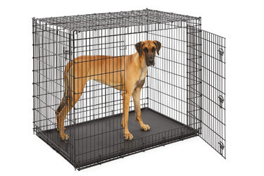 MidWest Homes for Pets XXL Giant Dog Crate
