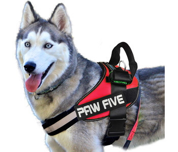 Paw Five CORE-1 Reflective No-Pull Dog Harness