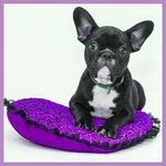 Best Dog Beds for Pugs