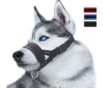 Best Muzzle for Husky