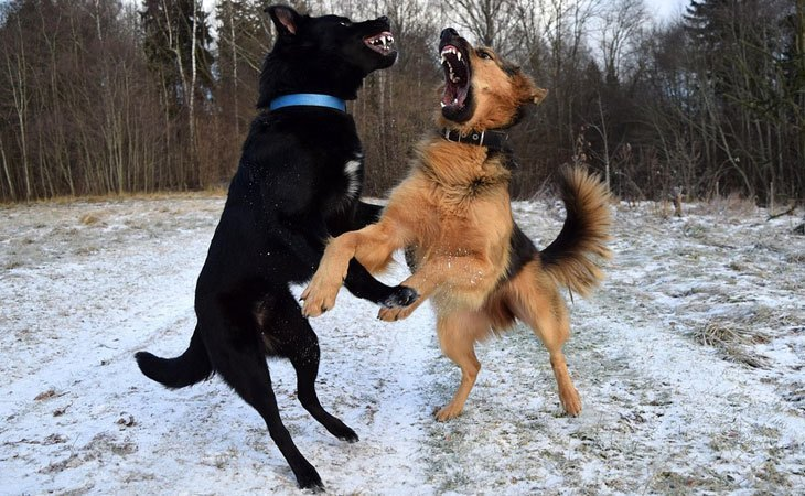 Aggressive Behavior in Dogs Toward Other Dogs