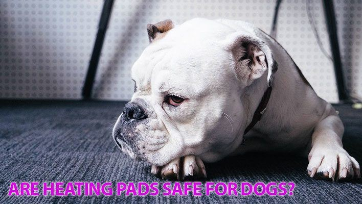 Are heating pads safe for dogs