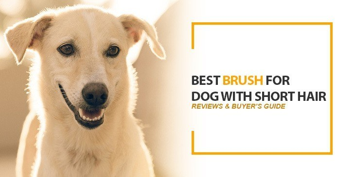 Best Brush for Dog With Short Hair